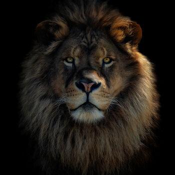Photo LION KING - PEDRO JARQUE