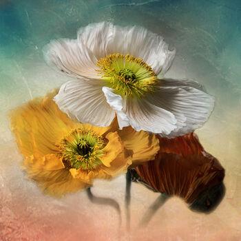 Photo Trio - Christine Ellger