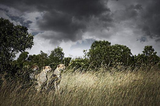 Photo Awaiting - Klaus Tiedge