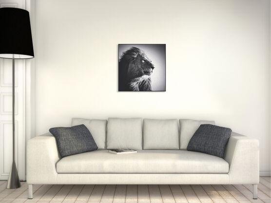Photo Lion in Compliance - Laurent Baheux