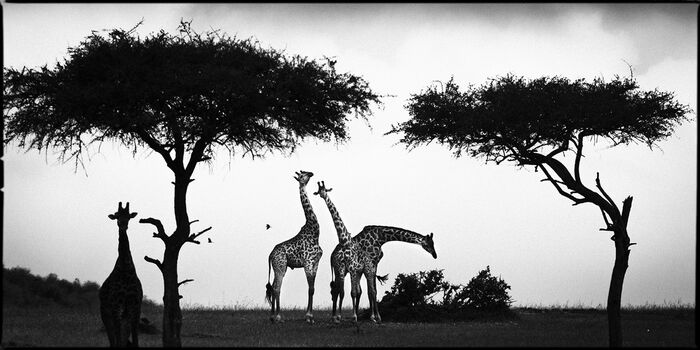 Photo laurent baheux photographe yellowkorner - Tableau africain noir et blanc ...