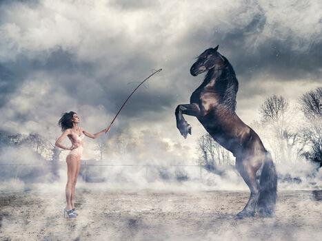Photo Sexy Horse - Nicolas Bets
