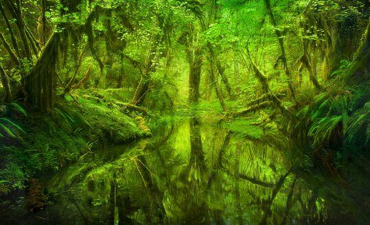 Paradise Forest Queets Rainforest Washington