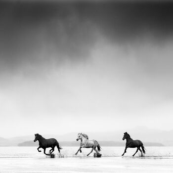 Photo Three horses - Jonathan Chritchley