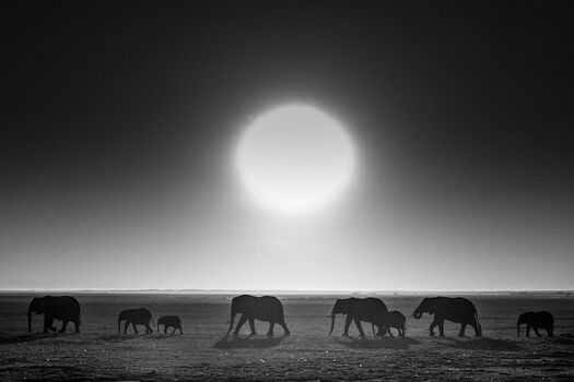 Photo Elephants against the sun, Kenya 2015 - Laurent Baheux
