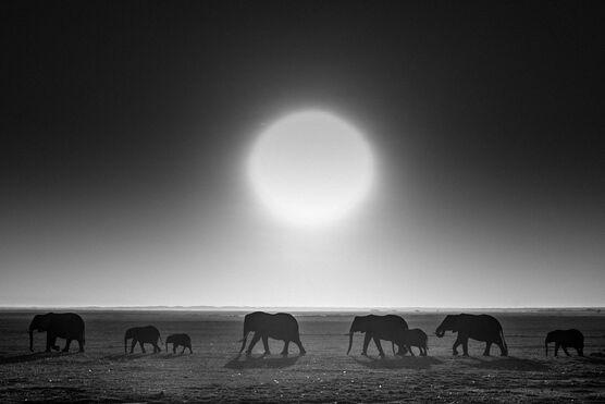 Photo Elephants against the sun, Kenya 2015 - Laurent Baheux