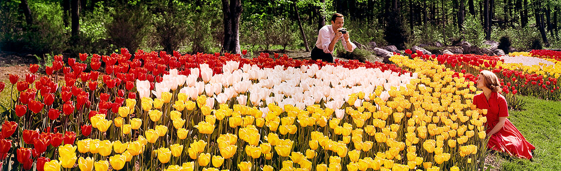 Photo TULIP GARDEN 1964 - Colorama