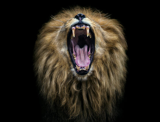 Photo BIG MOUTH - PEDRO JARQUE