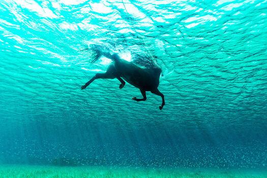 Photo Seahorse II - Kurt Arrigo