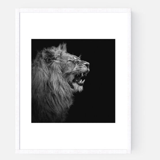 Photo YOUNG LION I - Lukas Holas