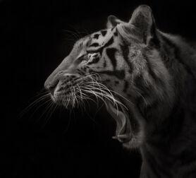 Photo Open Focus - Ruud Peters