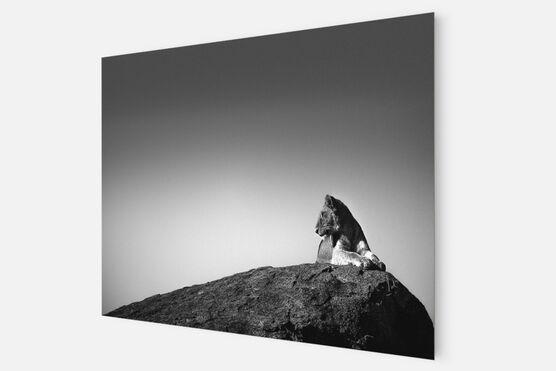 Photo LION SUR UN ROCHER - Laurent Baheux