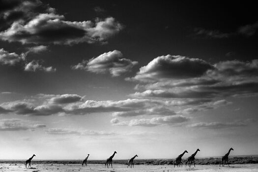 Photo Seven ladies following the clouds, Kenya 2013 - Laurent Baheux