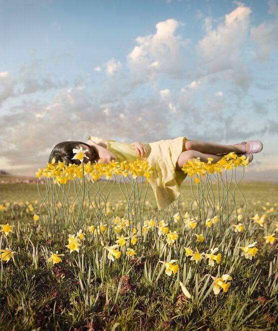 Photo Yellowbud - Alastair Magnaldo