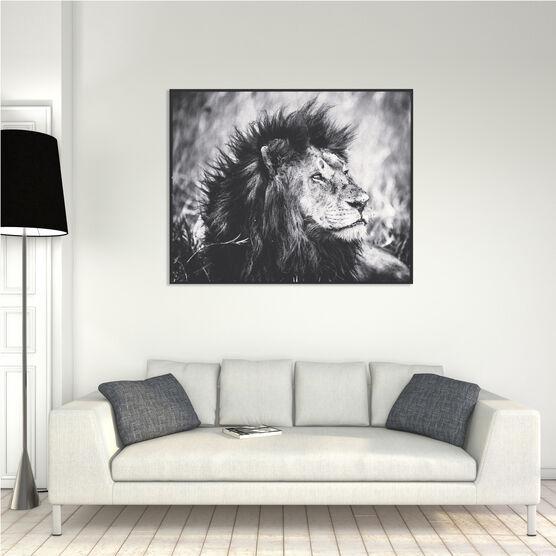 Photo Dreamy Lion - Laurent Baheux