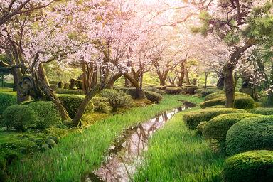 Sakura stream