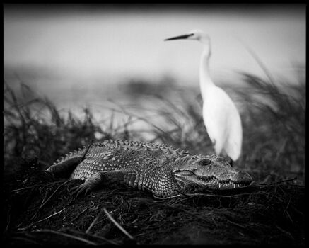 Photo Crawl or Fly - Laurent Baheux