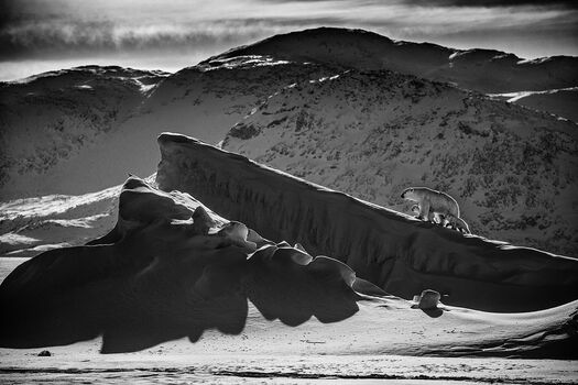 Photo LIFE ON ICE I - Laurent Baheux
