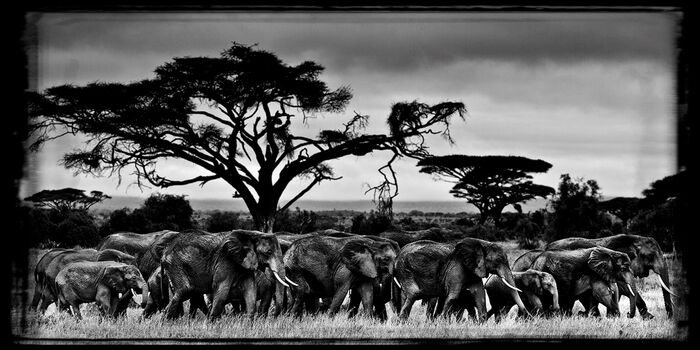 Photo MARCHE DES ÉLÉPHANTS - Laurent Baheux