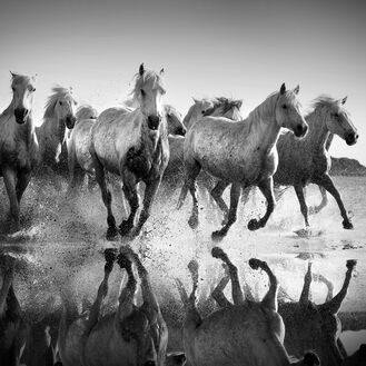 Horses and reflexions