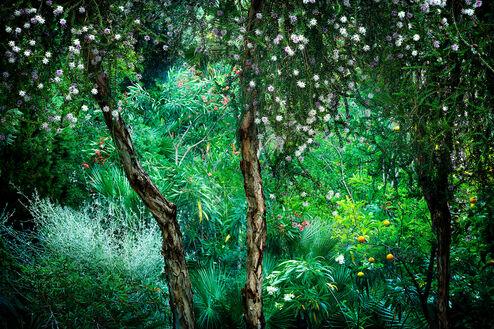 Le Jardin Eden 1