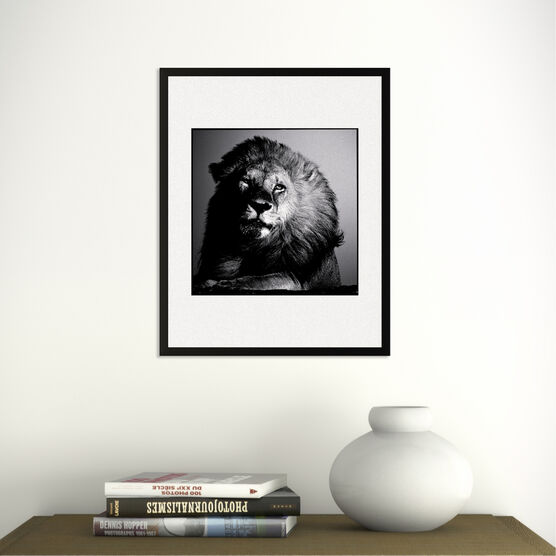 Photo Lion in the Twilight - Laurent Baheux