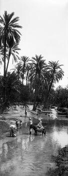 Photo OUED OASIS SUD DU SAHARA ALGÉRIEN II -  Léon et levy