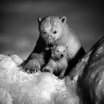 Photo STRONGER TOGETHER - Laurent Baheux