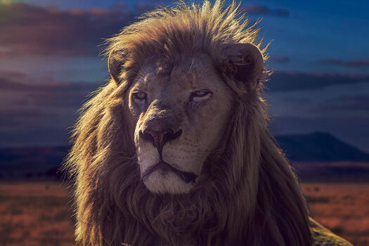 Photo THE GOLDEN KING - JACKSON CARVALHO