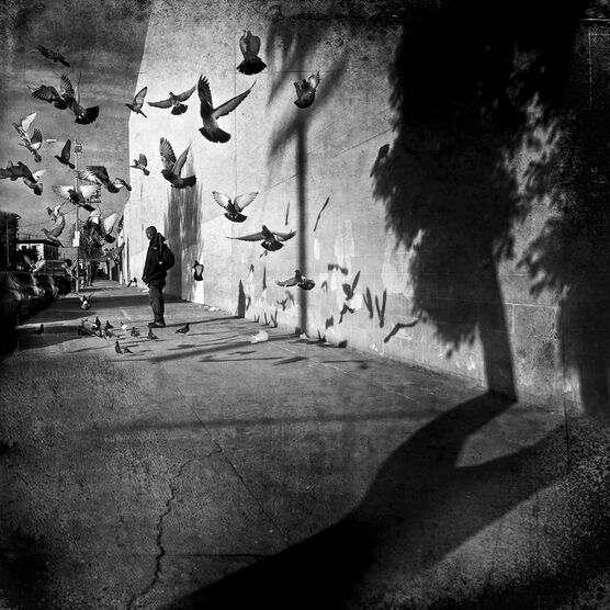 Photo PIGEONS and SHADOWS - Lee Jeffries