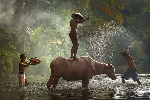 Photo TAKING SHOWER WITH BUFFALO - RARINDRA PRAKARSA