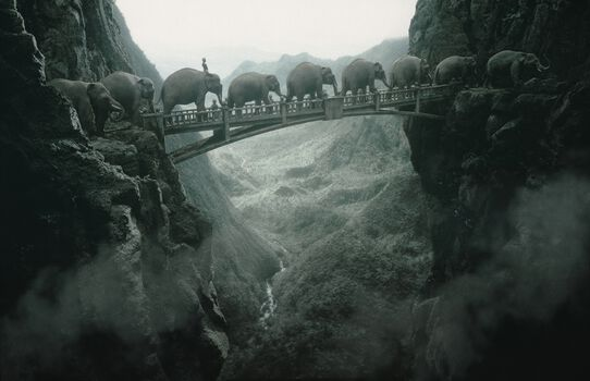 Photo Elephants - Thomas Herbrich
