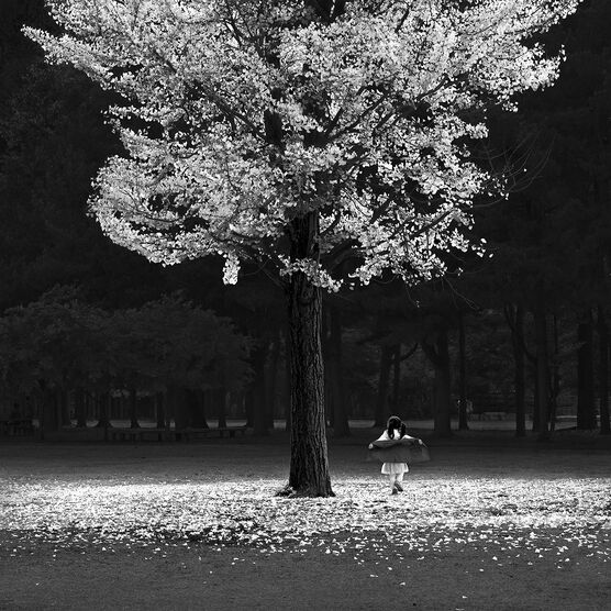 Photo AUTUMN TREE - Jefflin