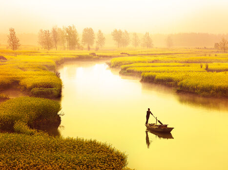 Photo River of rapeseed - Thierry Bornier