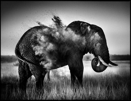 Photo Dust Explosion I - Laurent Baheux