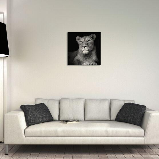Photo The Lioness - Lukas Holas