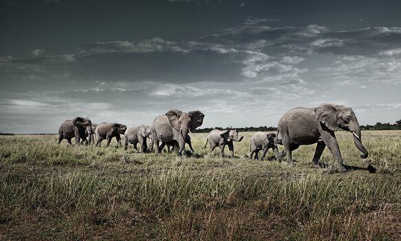 Photo Attentive March - Klaus Tiedge