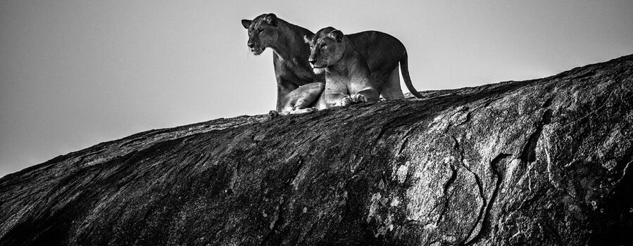 Photo Somebody is coming, Tanzania 2015 - Laurent Baheux