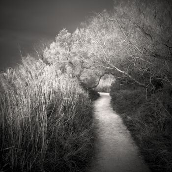 Photo The Way We Are - Philippe Mougin