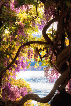 Photo WISTERIA 2 - Bernhard Hartmann