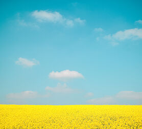 Photo SKY OVER FLOWERS - Herod Becen