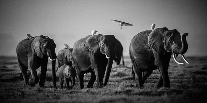 Photo Flying over giants, Kenya 2015 - Laurent Baheux