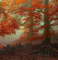 Photo Ancient Calling of Autumn - Janek Sedlar