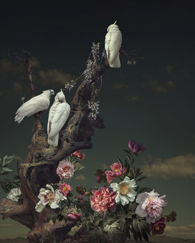 Photo THREE WHITE BIRDS - Yang Bin