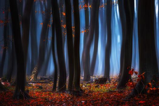 Photo Morning Dusk of the Leaves - Janek Sedlar