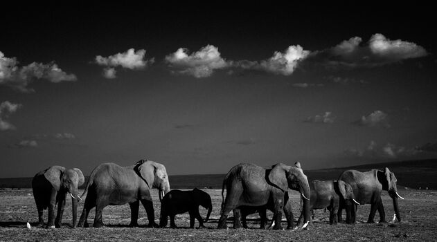 Photo IN THE SHADE OF THE GIANTS, KENYA 2015 - Laurent Baheux