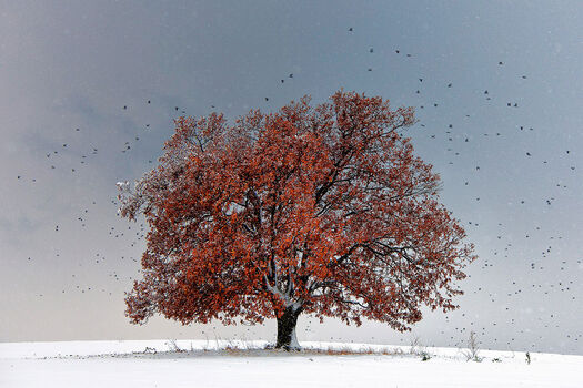 Photo Tree of Life - Evgeni Dinev