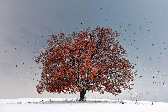 Photo Tree of Life - Evgeni Dinev