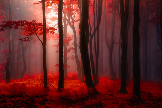 Photo Where No Words Needed - Janek Sedlar