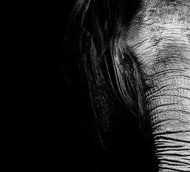 Photo Elephas Maximus - Nicolas Evariste